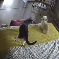 Chat dresse chien