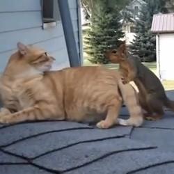 un écureuil joue avec un chat