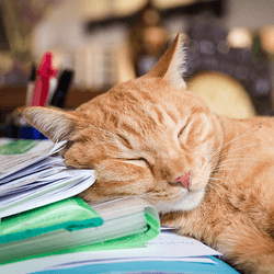 un chat endormi sommeil