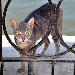 chat errant caire
