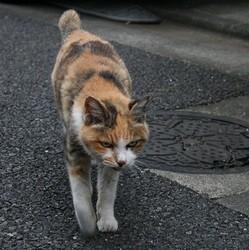 faut-il tuer les chats errants