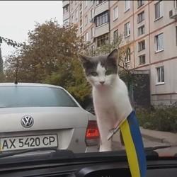 un chat sur le capot d'une voiture