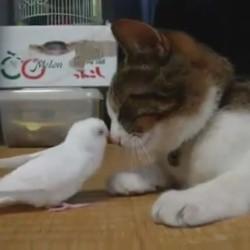 un chat et un oiseau jouent ensemble