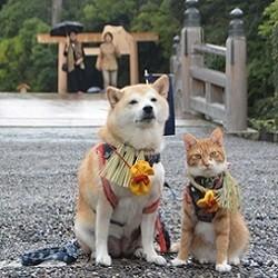 un shiba inu et un chat voyagent au Japon