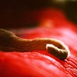 chat euthanasie handicap animal de compagnie