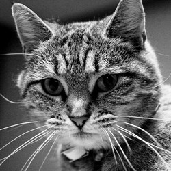 chat vétérinaire euthanasie