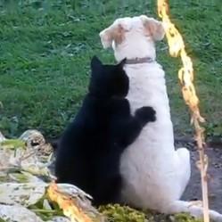 chat-fait-massage-a-chien