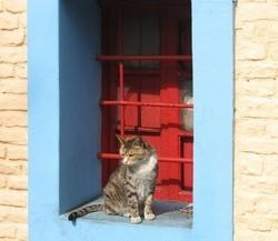 chat tombé par la fenêtre chat tombé du balcon chat chute