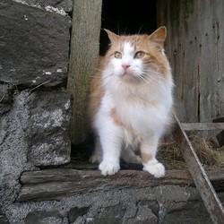 chat ferme