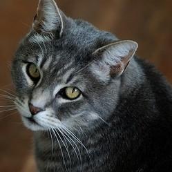 chat fleurs de bach