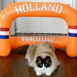 un chat joue au football