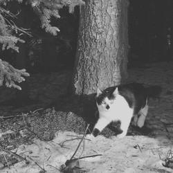 chat retrouvé 16 ans apres fugue