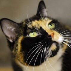 chat fugue 5 ans retrouve new york