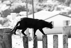 Kofi chat fugueur