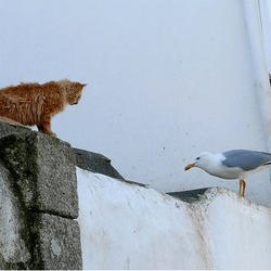 chat mouette