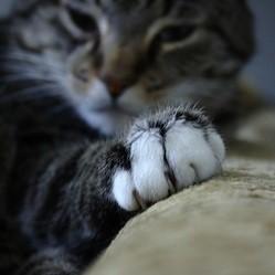 Pourquoi et comment couper les griffes de son chat - Comment couper les griffes de son chat ...