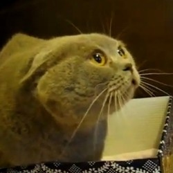 chat gronde sa maîtresse