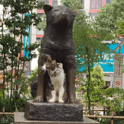 statue hachiko chat