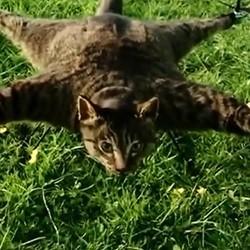 chat empaillé