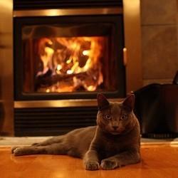 chat intérieur hiver
