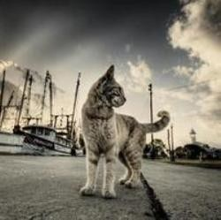 chat immigré