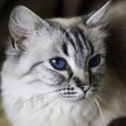 chat incendie recherches 9 jours