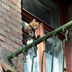 chat sort indemene chute 12 étages