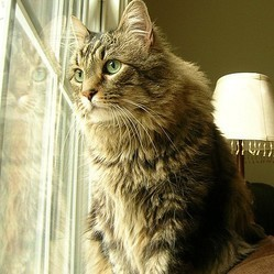 Les chats et l'extérieur Chat-interieur