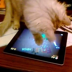 chat joue jeux video ipad apple