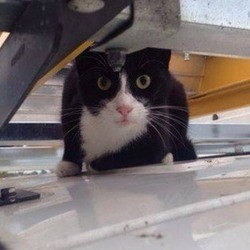 un chat reste sur le toit d'un van pendant 35 kilomètres