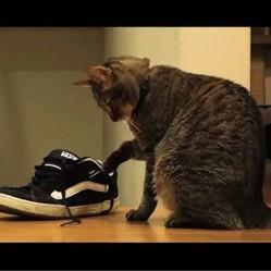 un chat joue avec des chaussures