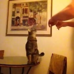chat langage des signes