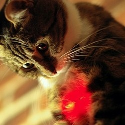 chat guerison cancer laser