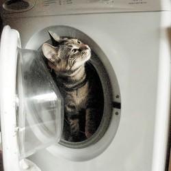 un chaton survit à un passage au lave linge