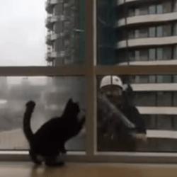 chat laveur vitres