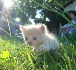 concours de chat le plus mignon