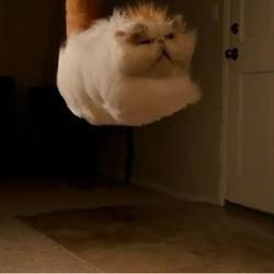 chat qui lévite