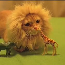 un chat se prend pour un lion