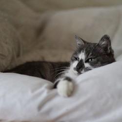 un hôtel de luxe pour chats