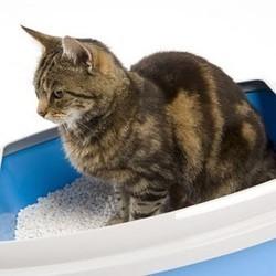 Quelle litière pour chat choisir