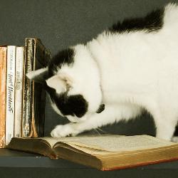 chat et livre