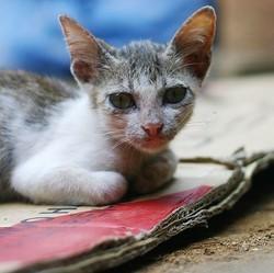 le sauvetage de trois chats par la fondation 30 millions d'amis