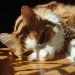chat maltraité