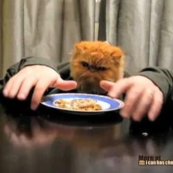 video de chat mange avec pattes