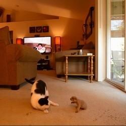un chat joue avec une marmotte