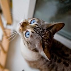 chat marquage territoire