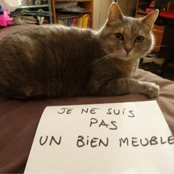 chat, statut animaux