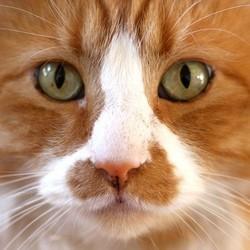 chat micro-ondes jeté par la fenêtre