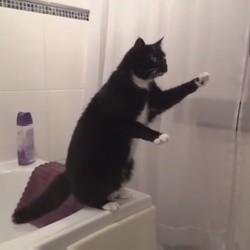 un chat se regarde dans un miroir