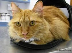 chat mort de la grippe A H1N1